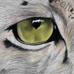 Hope, Through a Snow Leopard's Eyes