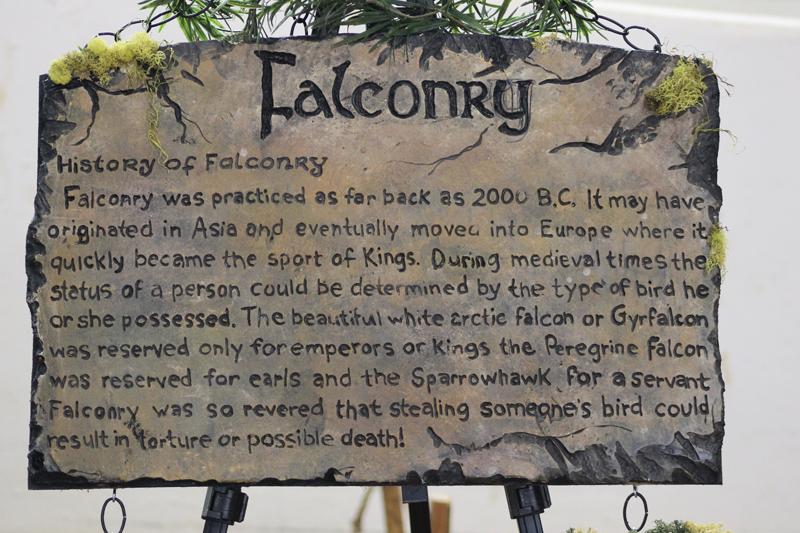 Falconry-1 6161