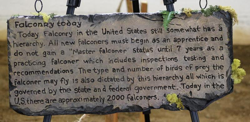 Falconry-2 6163