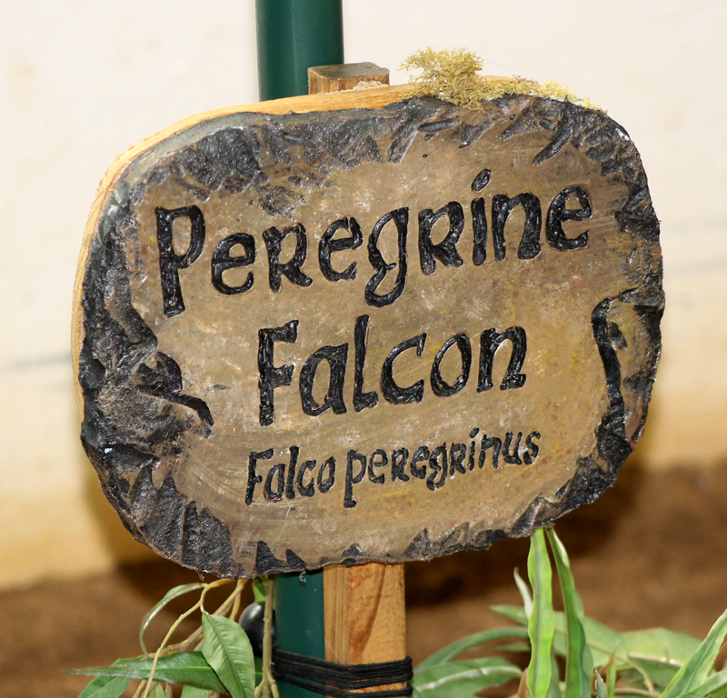 Peregrine Sign 6037