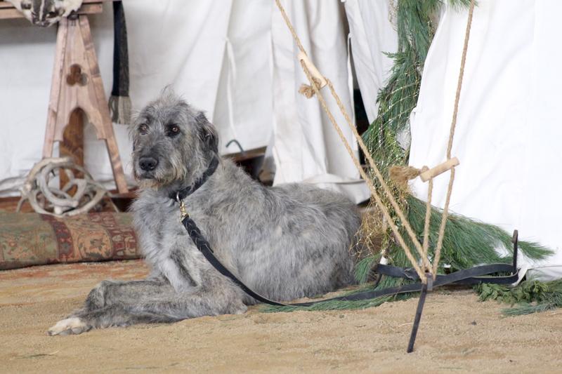 Wolfhound-2 6166