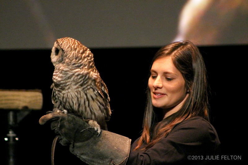 BarredOwl0895