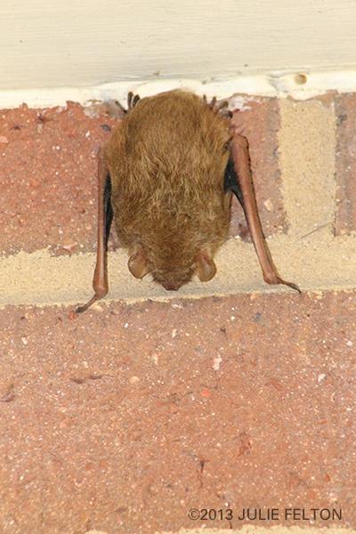 Bat1234