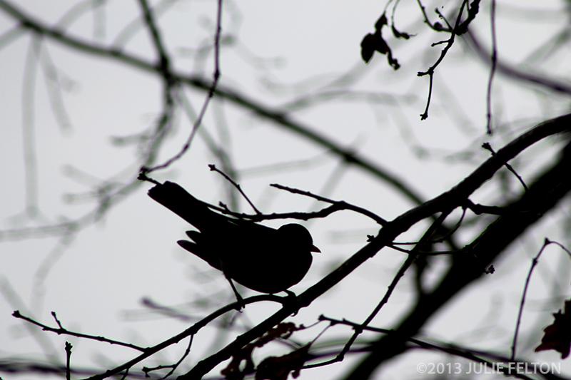 Bird0057B