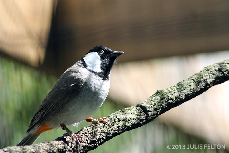 Bird0441B