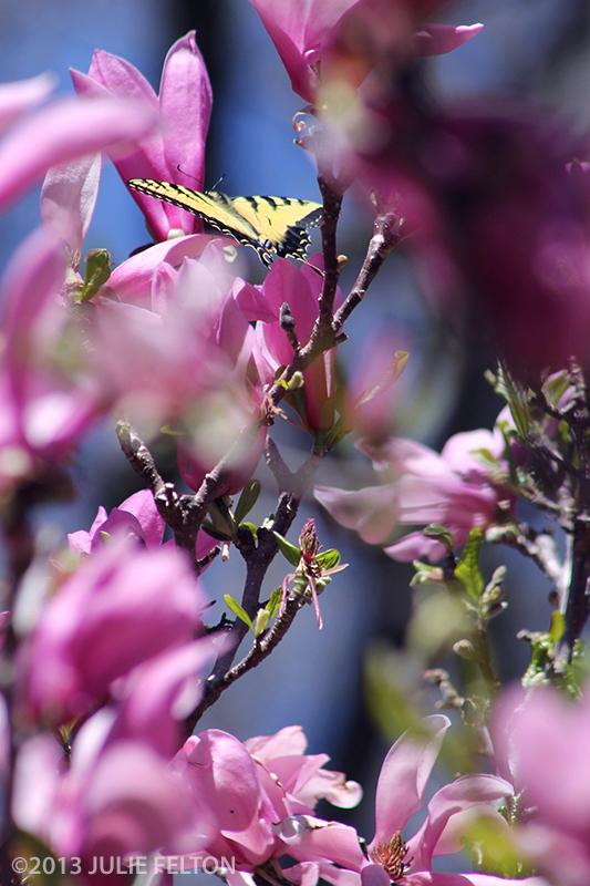 Butterfly0178B