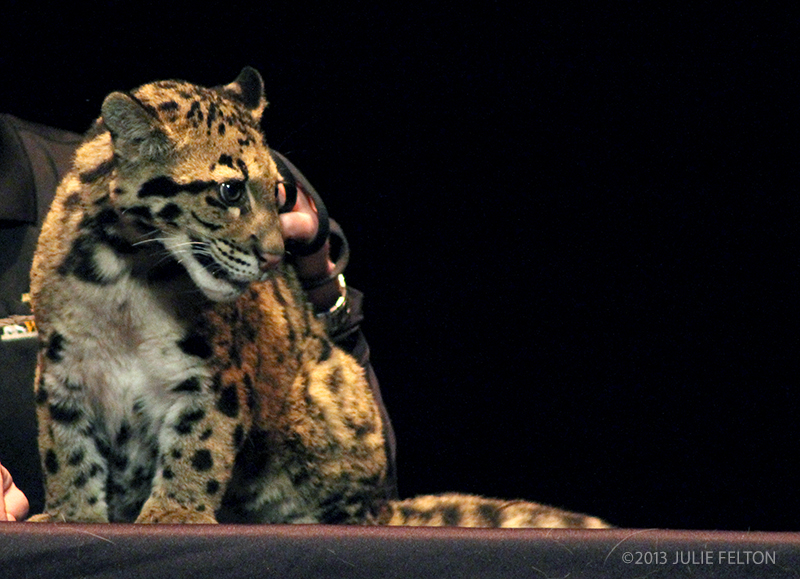 CloudedLeopard1052