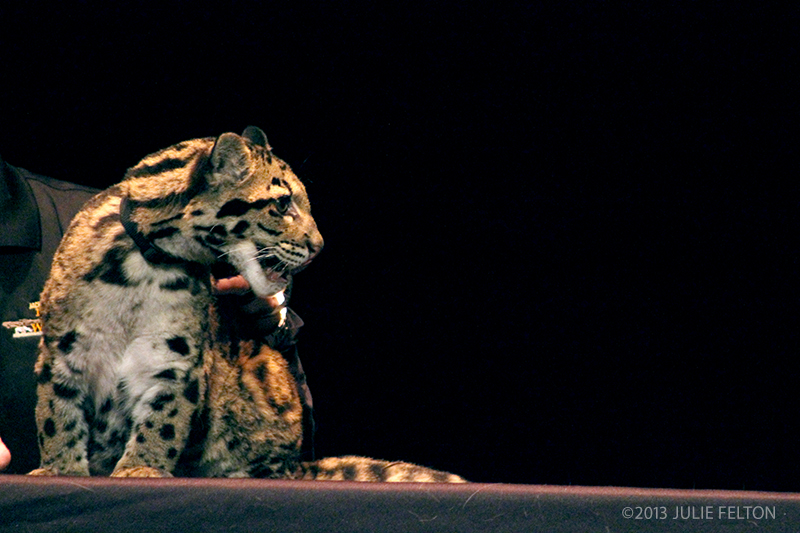 CloudedLeopard1054