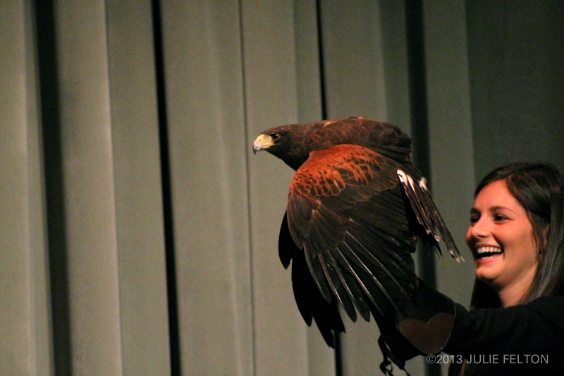 HarrisHawk0953