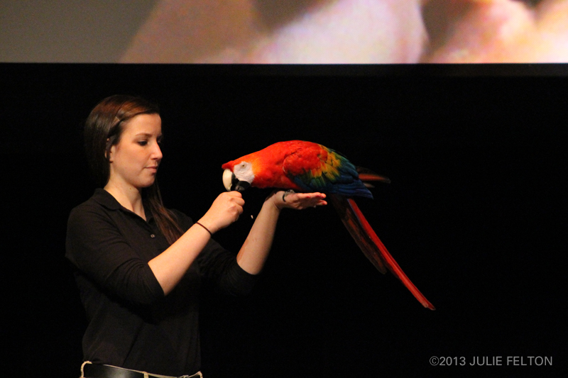 Macaw0840