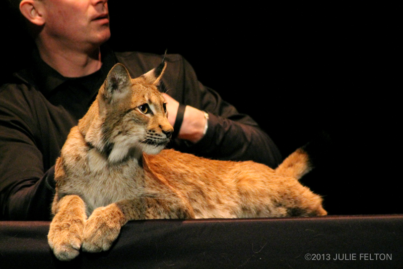 SiberianLynx0855