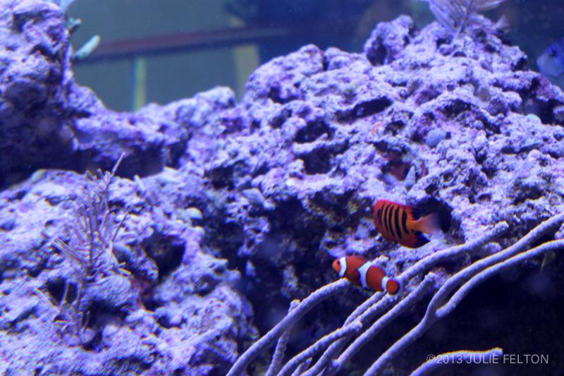 Aquarium2862