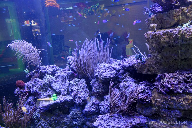 Aquarium2898