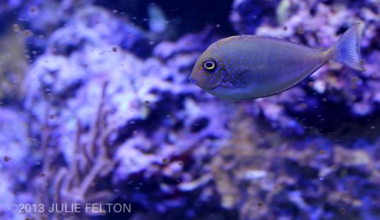 Aquarium2901