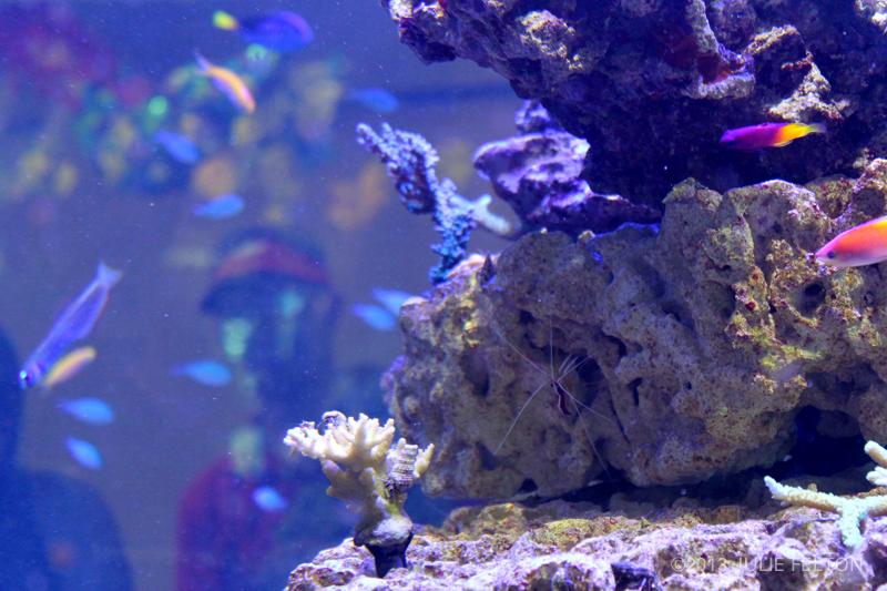 Aquarium2905