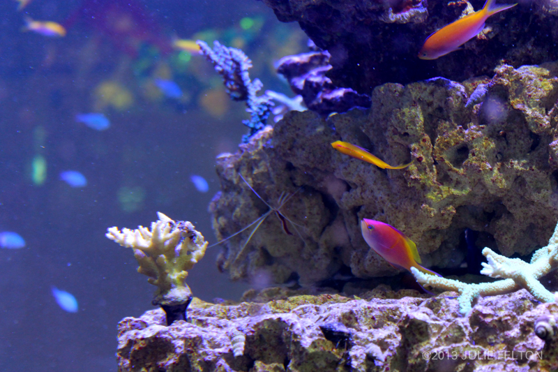 Aquarium2917