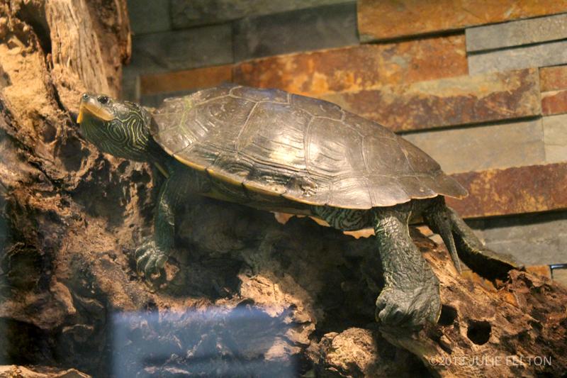Turtle2935