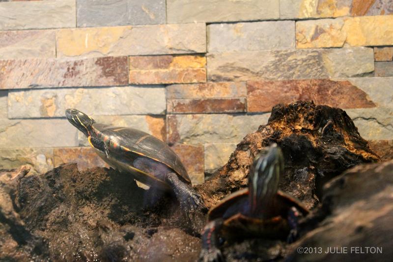 Turtles2938