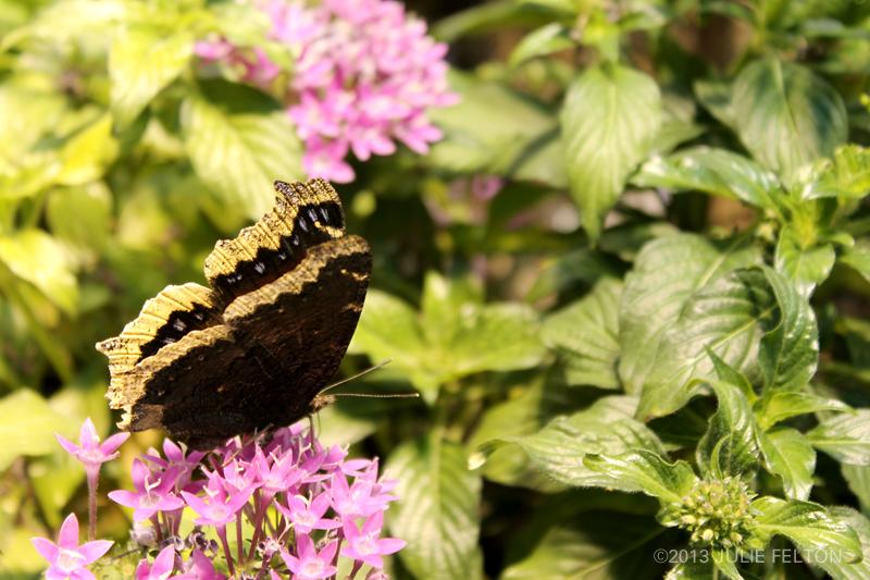 Butterfly 2953