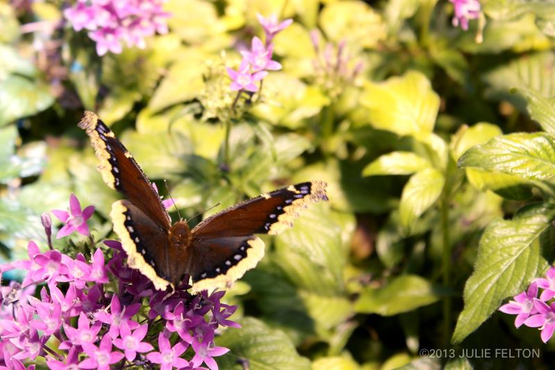 Butterfly 2966