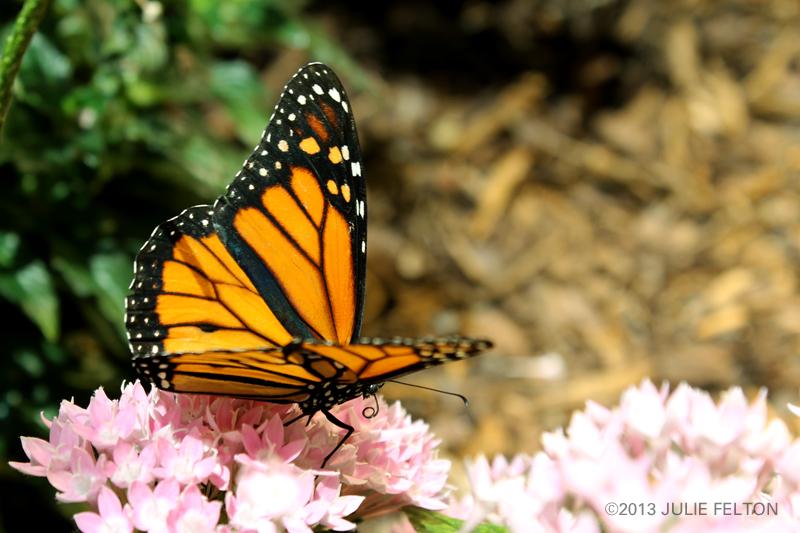 Butterfly 2975