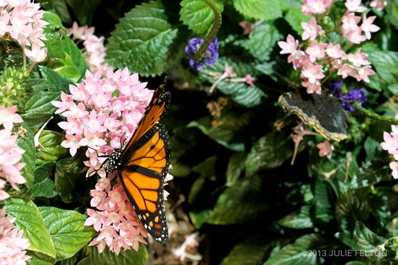Butterfly 2978