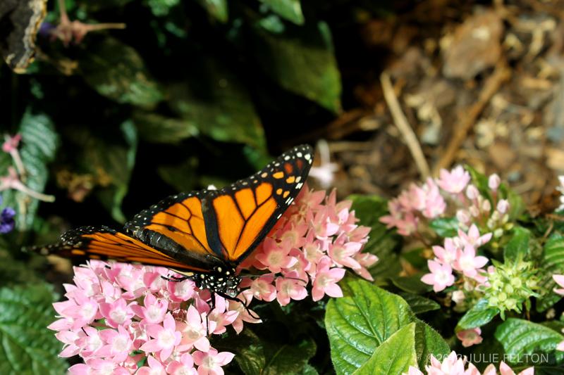 Butterfly 2980