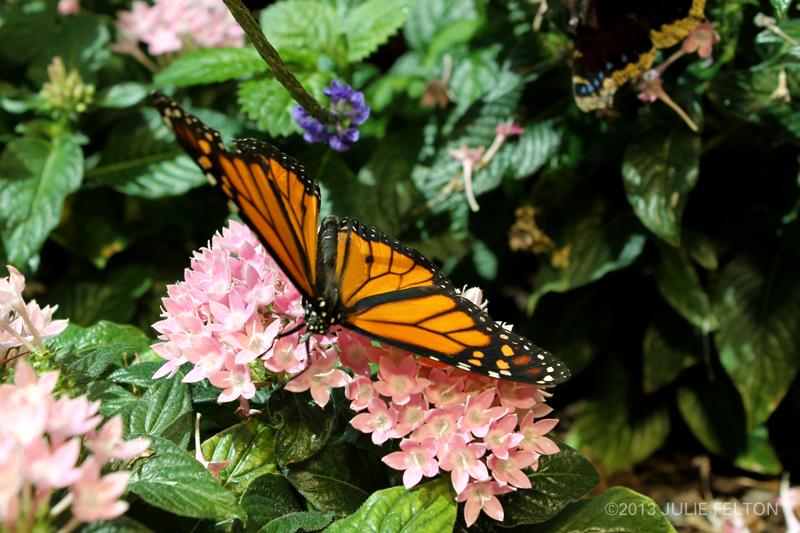 Butterfly 2982