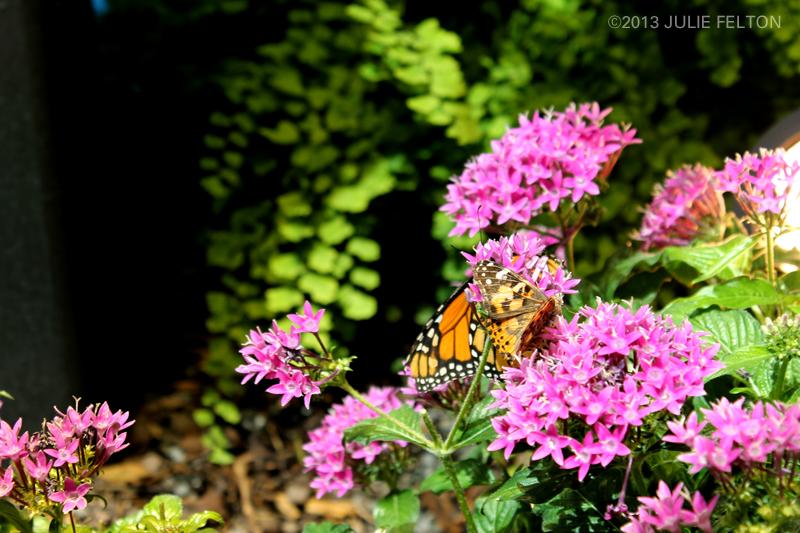 Butterfly 2983
