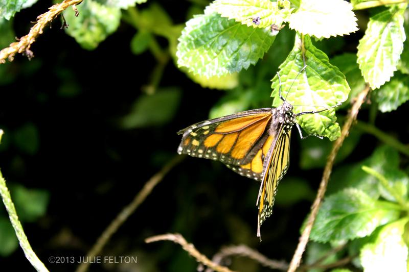 Butterfly 3008