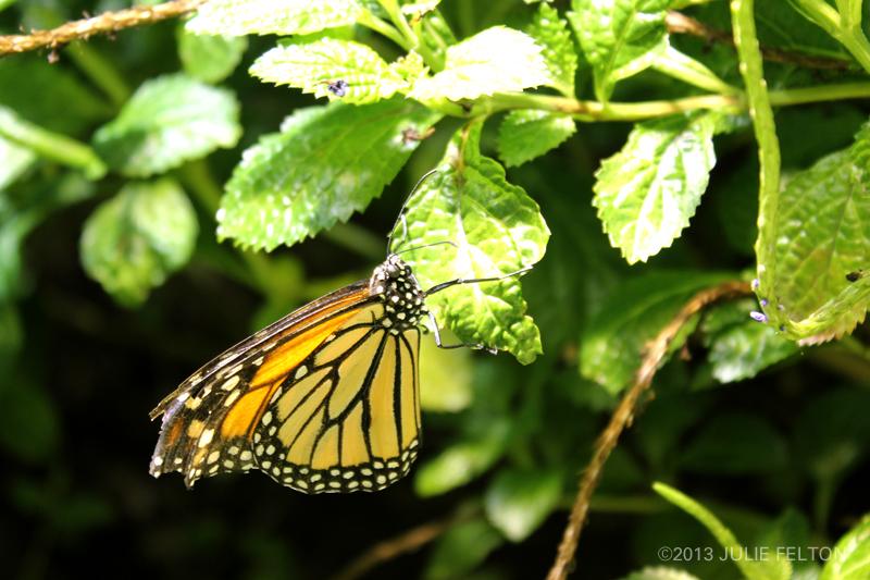 Butterfly 3016