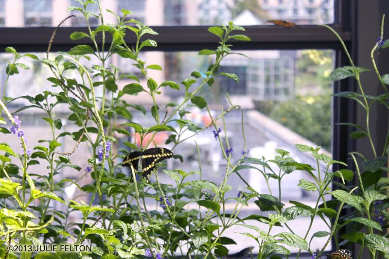 Butterfly 3021