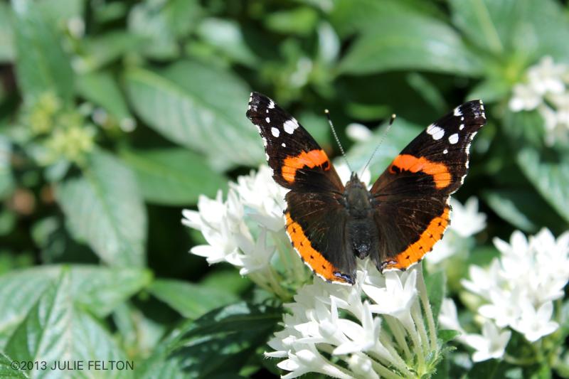 Butterfly 3037