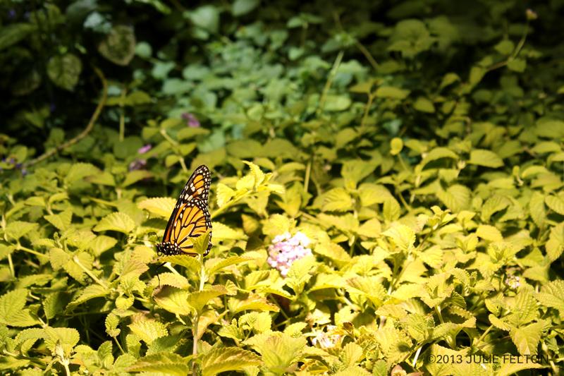 Butterfly 3039