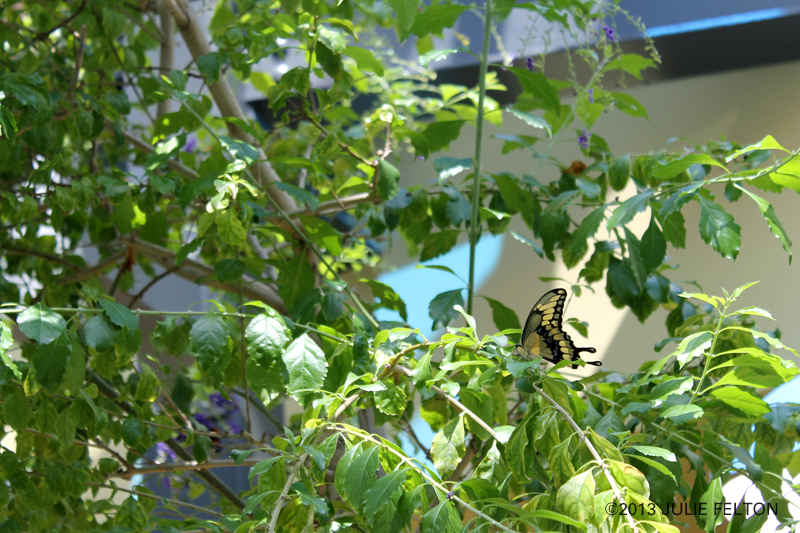 Butterfly 3071