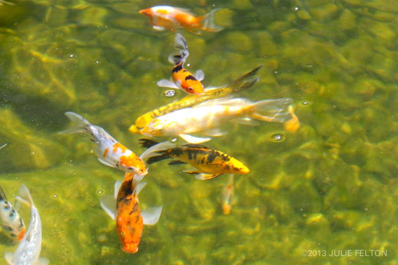 Pond 3156