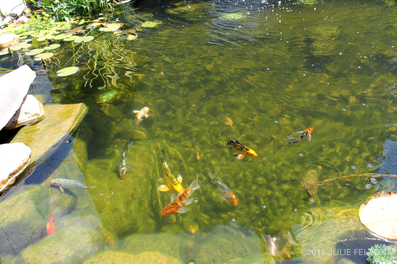 Pond 3158