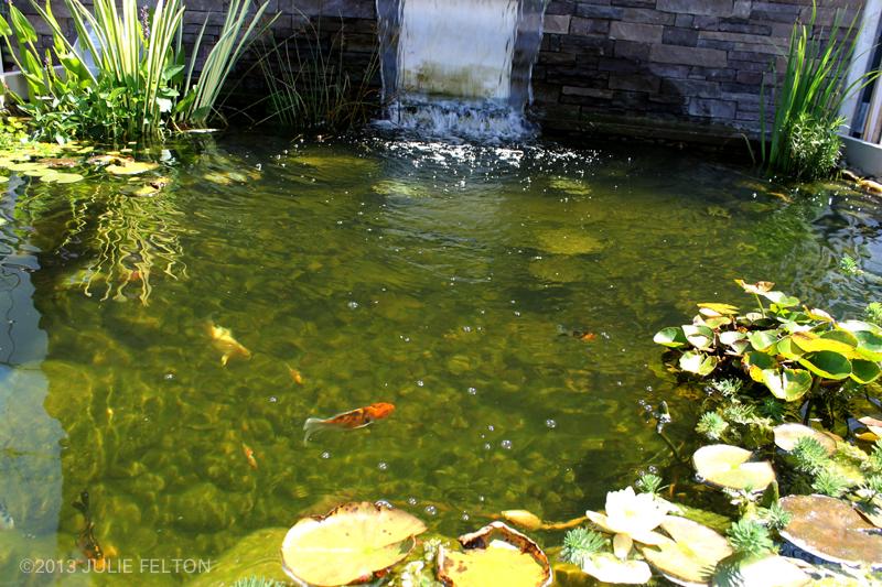 Pond 3161