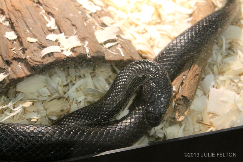 Snake 3218