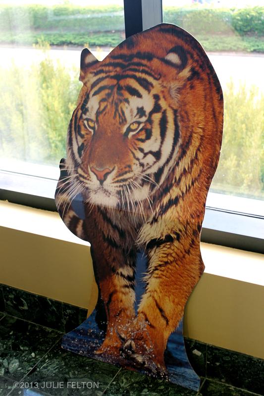 Tiger 5951