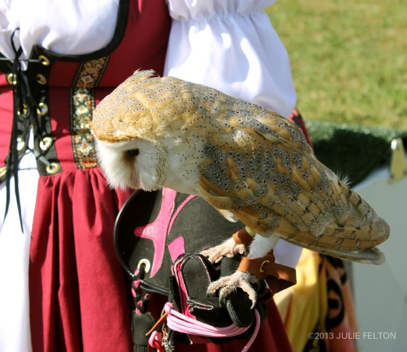 Barn Owl 6065