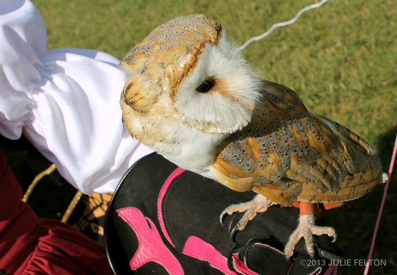 Barn Owl 6070