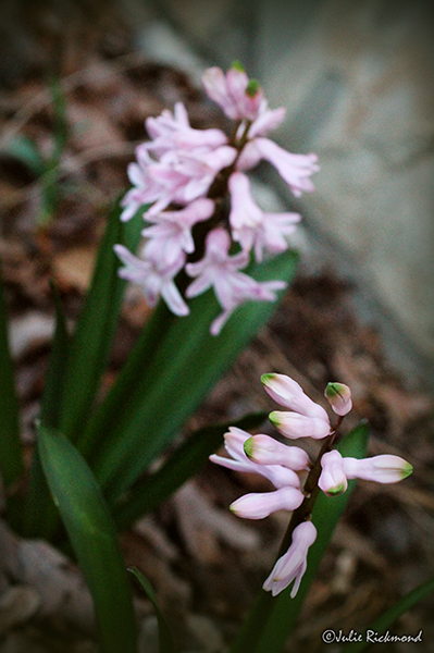 Flowers_C5_2432 (thumb)