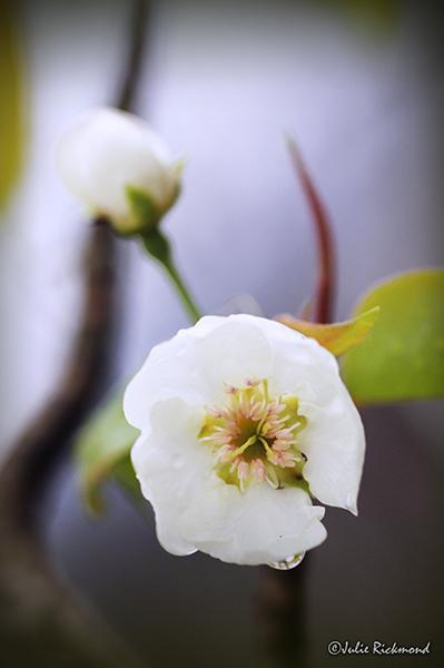 Flowers_C5_2901 (thumb)