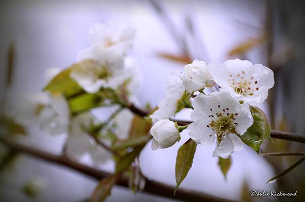 Flowers_C5_2929 (thumb)