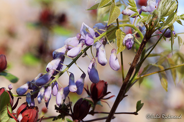 Flowers_C5_4506 (thumb)