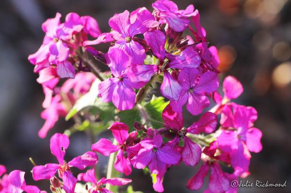 Flowers_C5_4525 (thumb)
