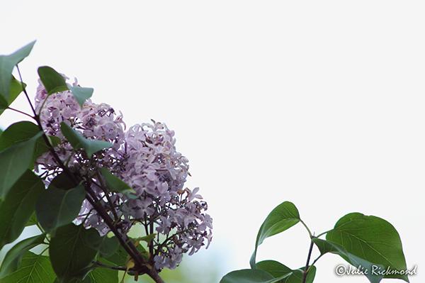 Flowers_C5_5233 (thumb)