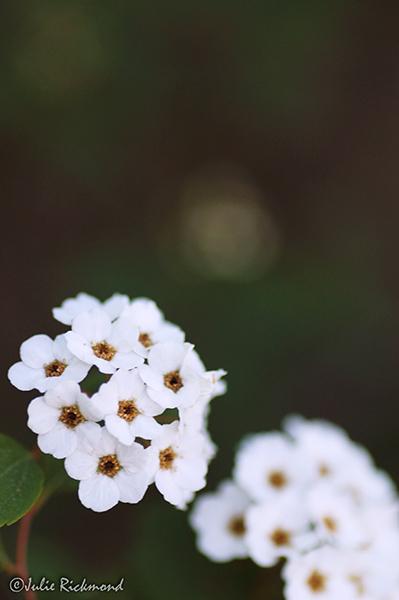 Flowers_C5_5270 (thumb)