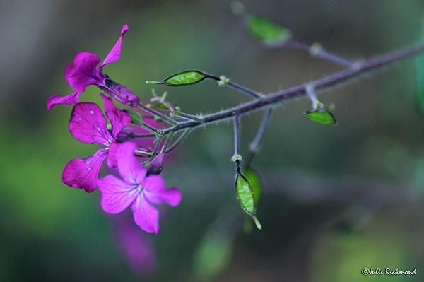 Flowers_C5_5613 (thumb)